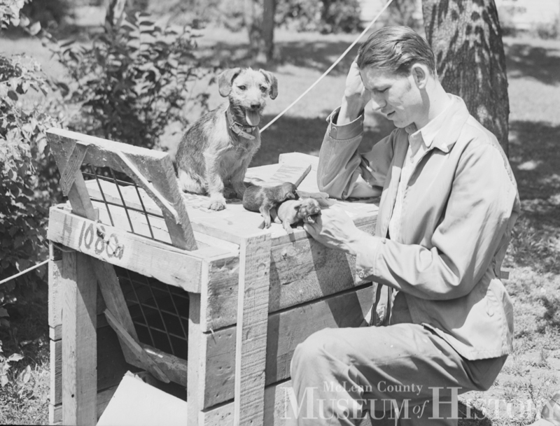 U.S. Army veteran Dwight Pierceall of Normal, Dog Bella, and two puppies