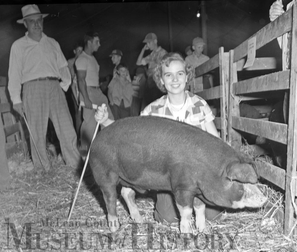 Grand champion barrow, 1950.