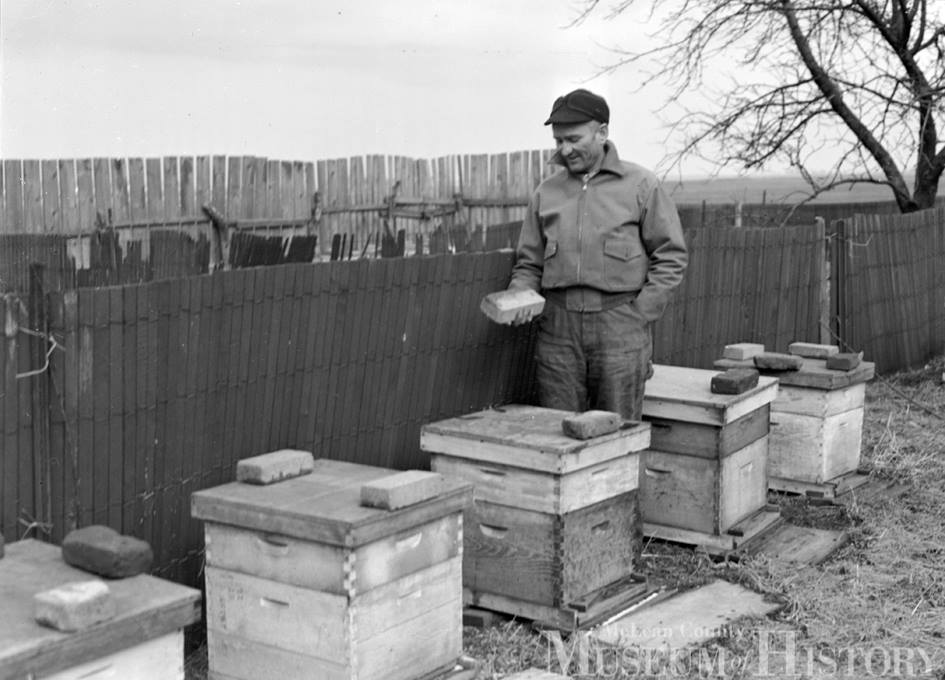 Beekeeping During Wartime Sugar Shortage